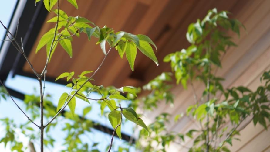 おしゃれな植栽で自然な目隠し!植木の選び方や人気の種類を紹介