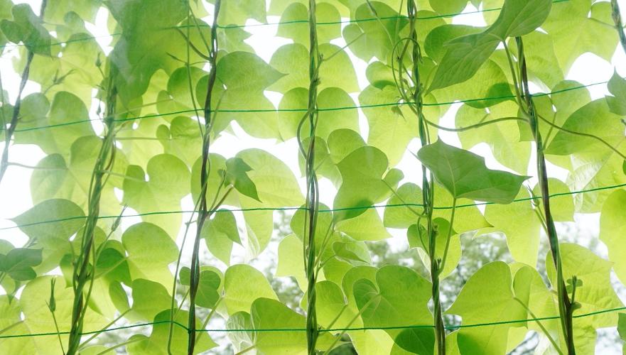 プランターで目隠し!地植えできない場所での安全な植栽方法