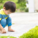 子どもが安心して遊べる庭作りと目隠しのポイントをご紹介