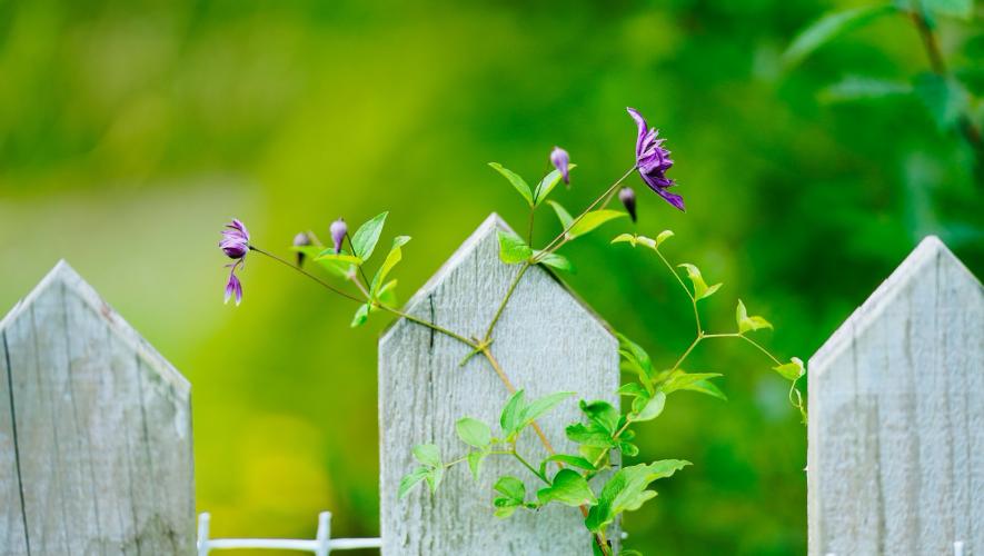 植栽の目隠しをフェンスに変えたい!目隠しのタイプ、検討のコツ